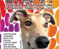 Greyhound Adoption Reunion Spring Fling!